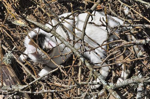 Camouflage sous les branches à deux pas des lézards verts