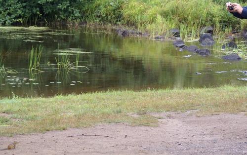 Parc Algonquin : faune et flore