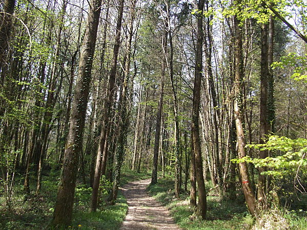 Forêt de Rothonne