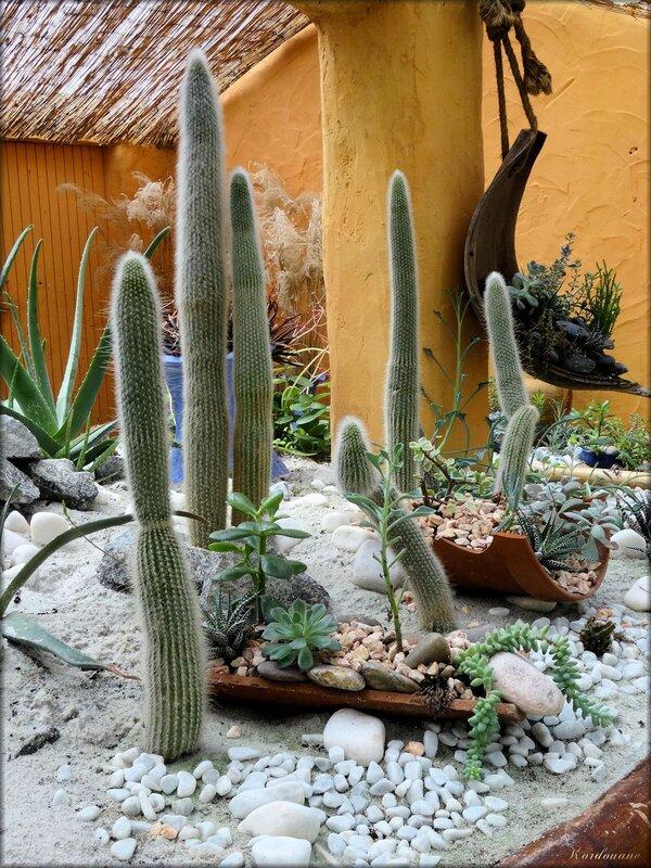 Photo de cactus (Parc floral de la Court d'Aron)