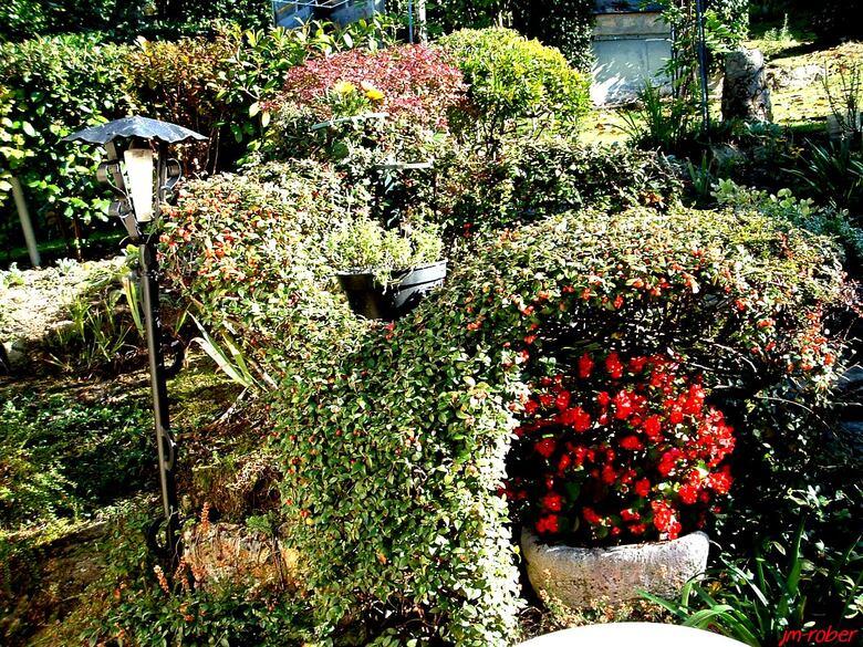 Jardin: La poèsie des plantes en cette fin octobre