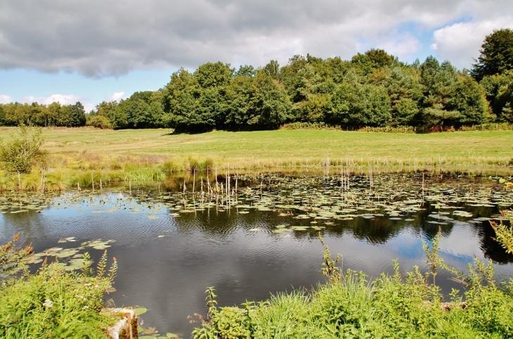 L'étang - Montaignac-Saint-Hippolyte