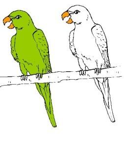 2 perroquets couleurs b
