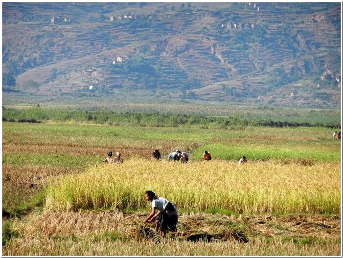 MADAGASCAR    LA VIE