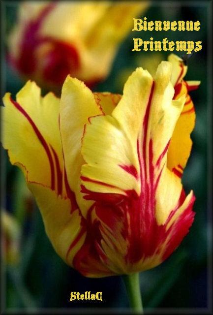 post mis pr remplacer la rose par tulipe(20-03-19