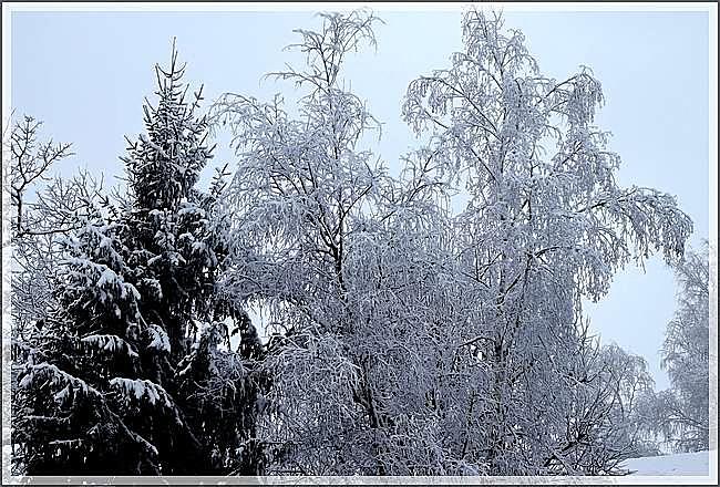 Le manteau blanc de février