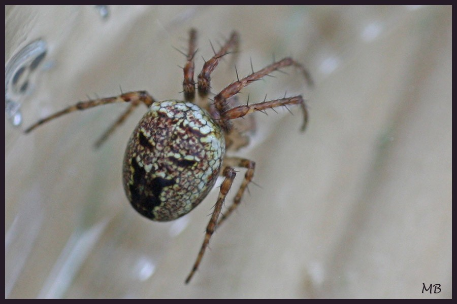 Arachnides-03-3600.jpg