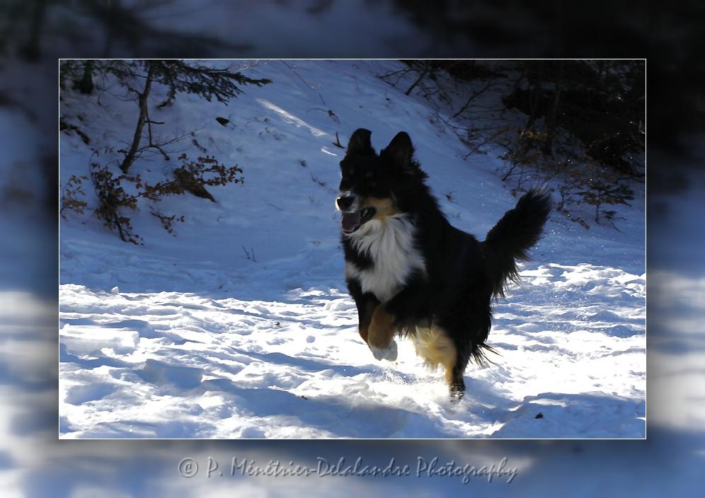 Gampo découvre la neige sur le Mont-Aiguoual...
