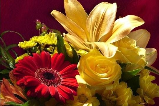 bouquet-sang-418869