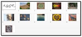Arts Visuels P1: Les arbres