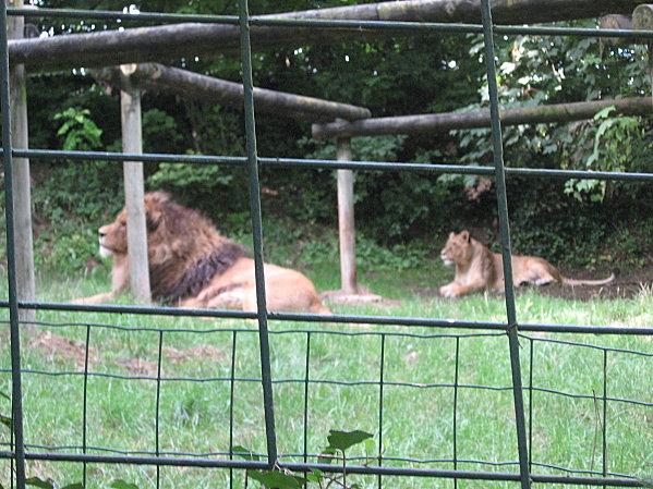 robe;Zoo de Beauval 27 juillet 2009 296