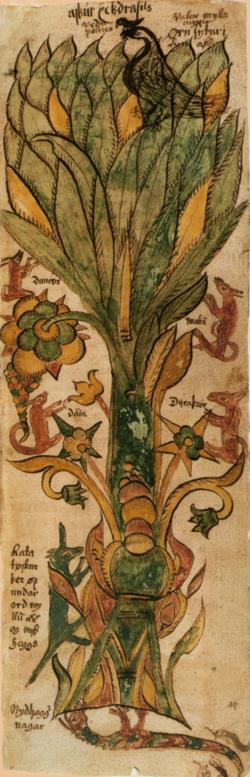 Yggdrasil, l'arbre cosmique