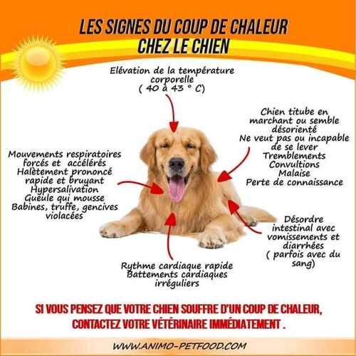Les signes du coup de chaleur chez le chien