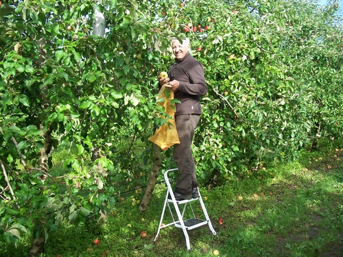 Des raisins... aux pommes !