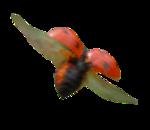 Tubes coccinelles et papillon