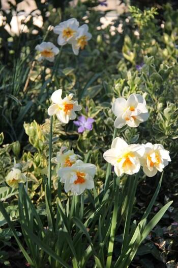 floraison bulbe 2020
