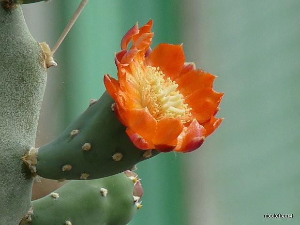 cactusavril-2010-422--15-.jpg