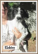 A adopter: