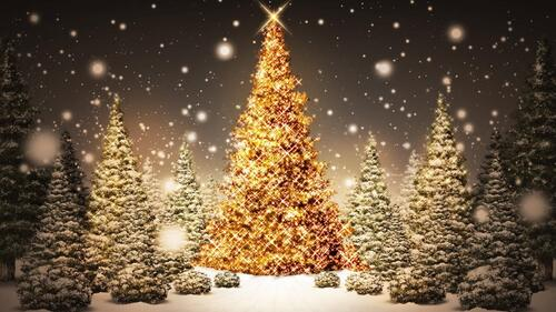 Vous avez dit Noël?   #JoyeuxNoël  #MerryChristmas.