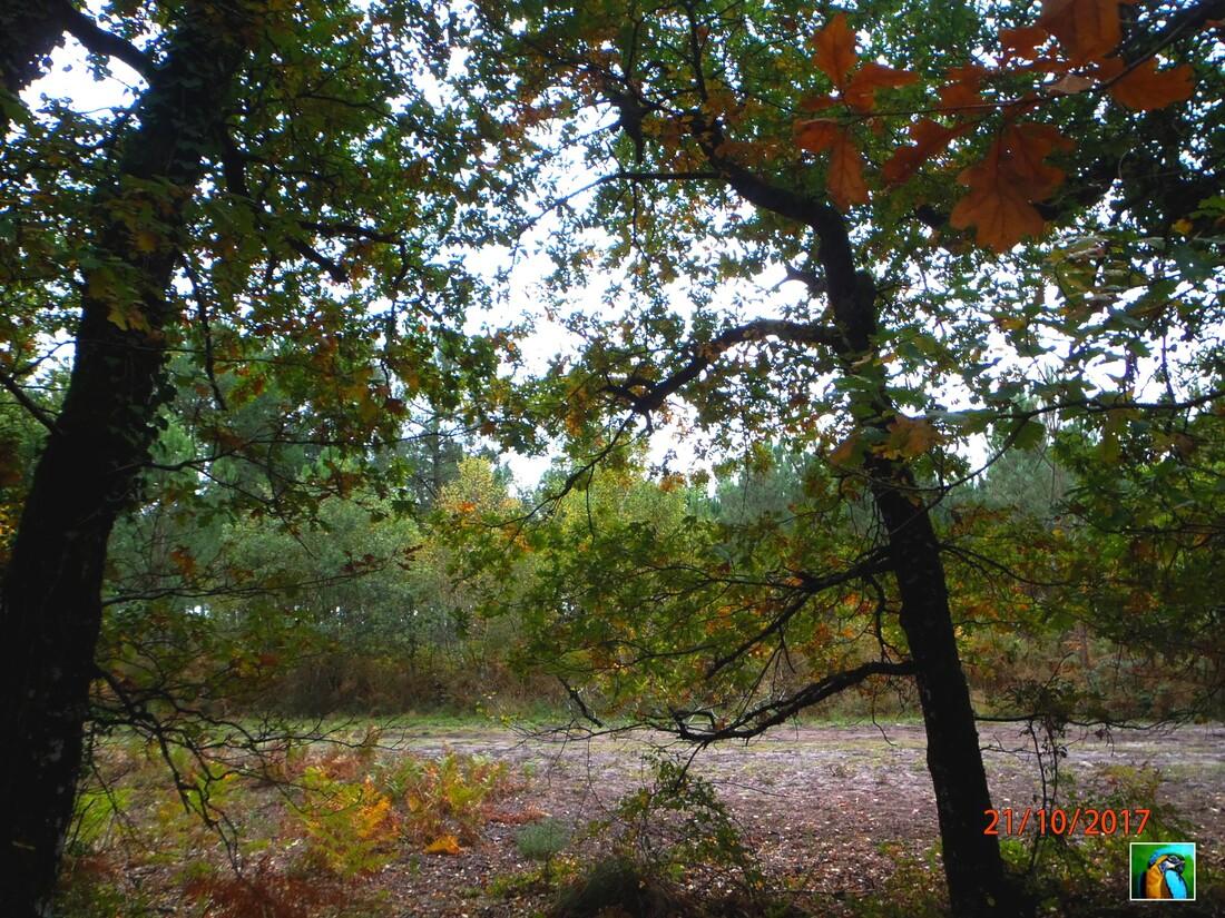 automne ou pas automne ?