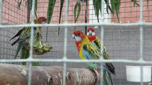 Expo d'oiseaux 1