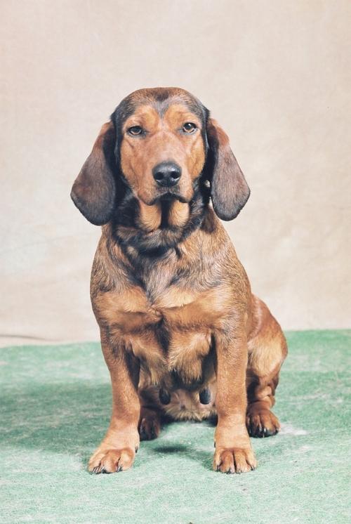 Animaux domestiques : chiens