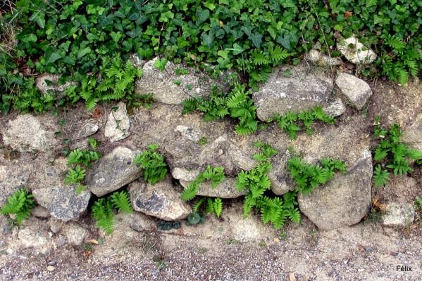 bw06---Un-mur.JPG