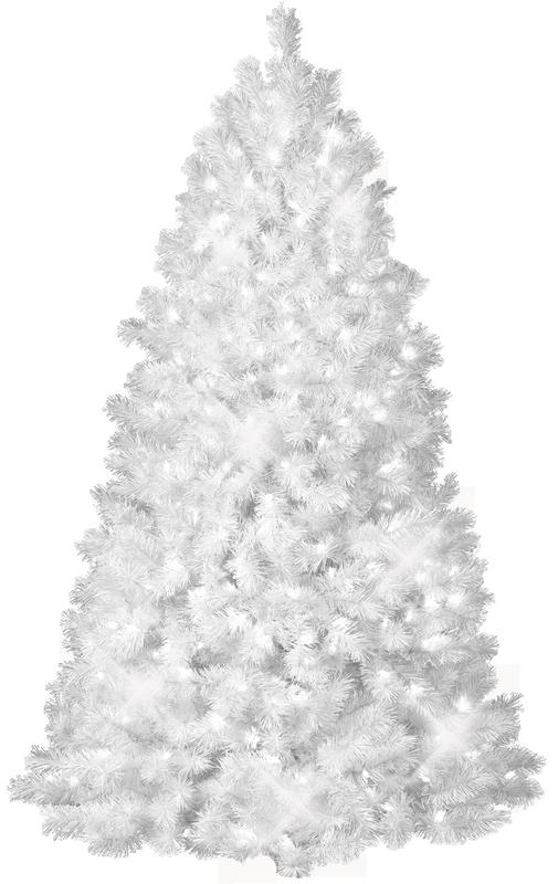 Sapin Blanc
