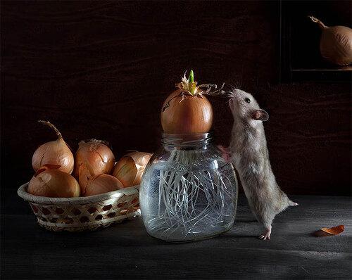 Elena Eremina et la vie des animaux