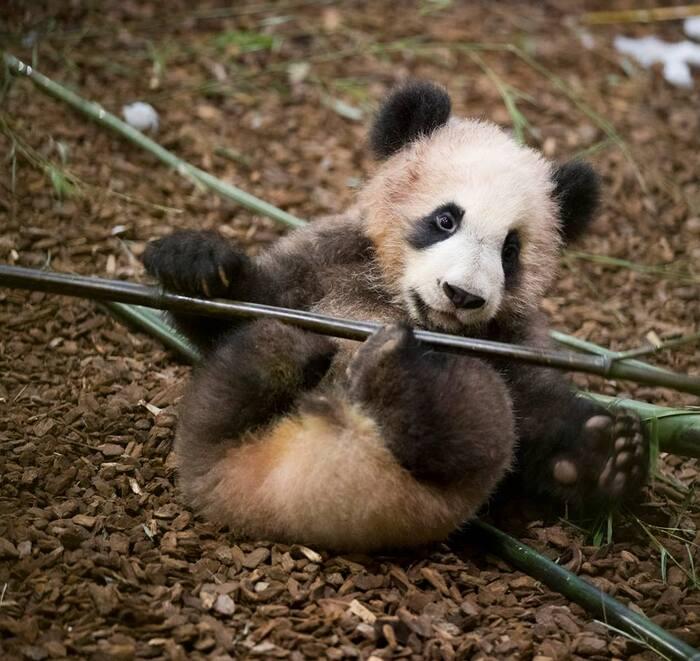 Bonjour....  avec notre petit panda qui a fêté ses 7 mois hier 4 mars