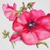 rose trémière mars 2011 [640x480]