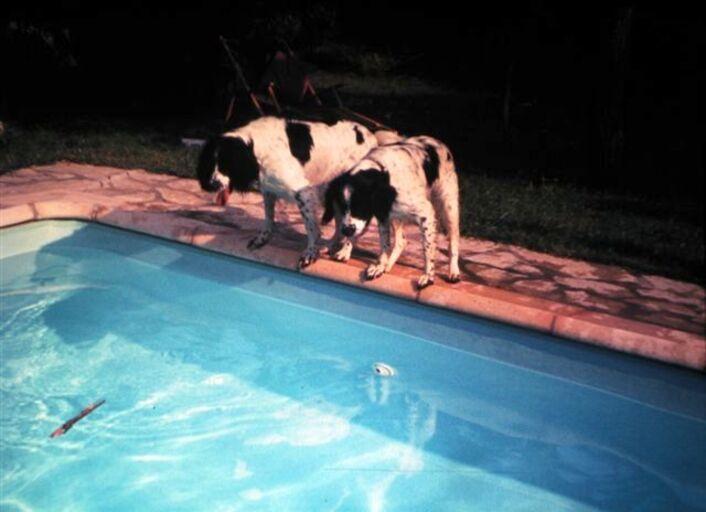 animaux-0345.jpg