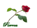 Perles de rosée animées Rose