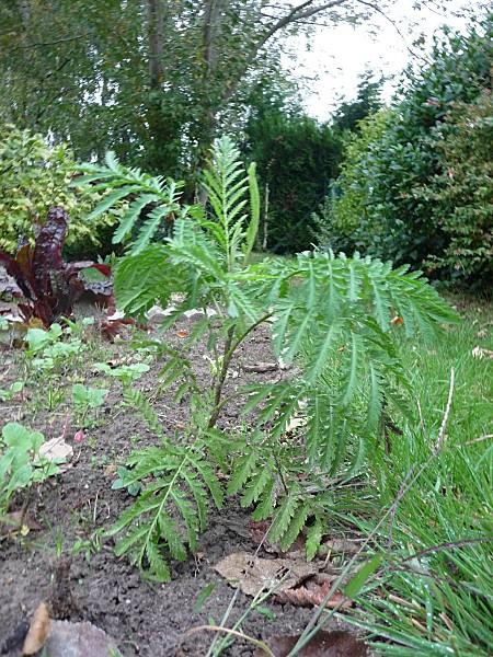 plante-anoucha-a-identifier--2-.JPG