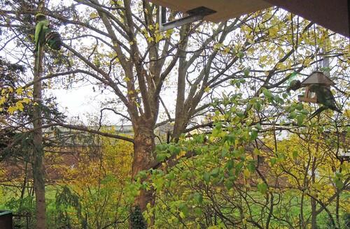 Les orgueils des écureuils de l'automne...