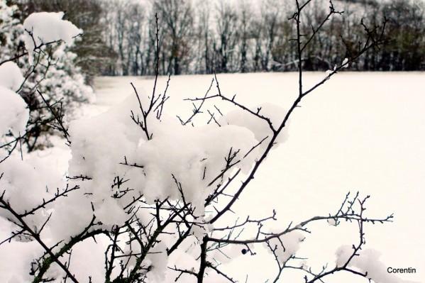 z04---Belle-neige.JPG