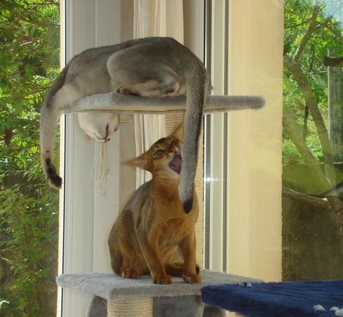 Jeu sur l'arbre à chats !!!!