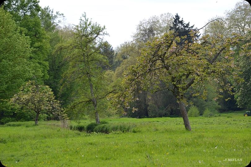 Suite de ma promenade champêtre à Rambouillet (3)