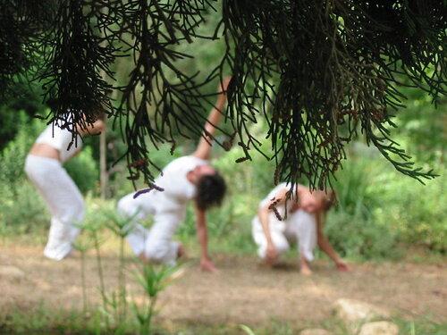 Fête de l'arbre