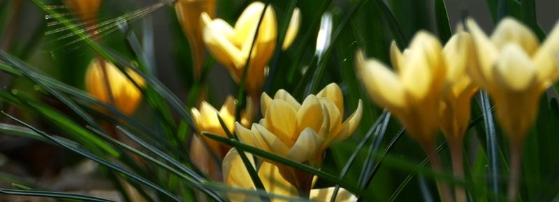 Lumiére du printemps