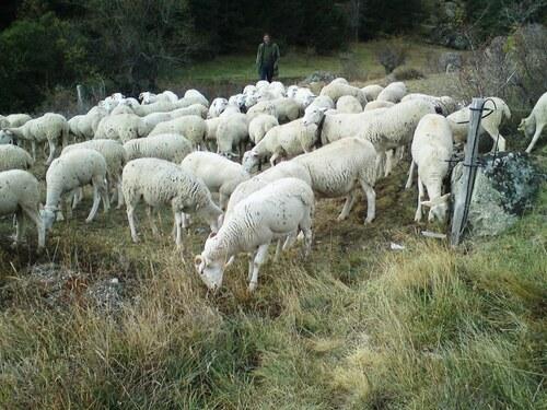 Descente des agnelles