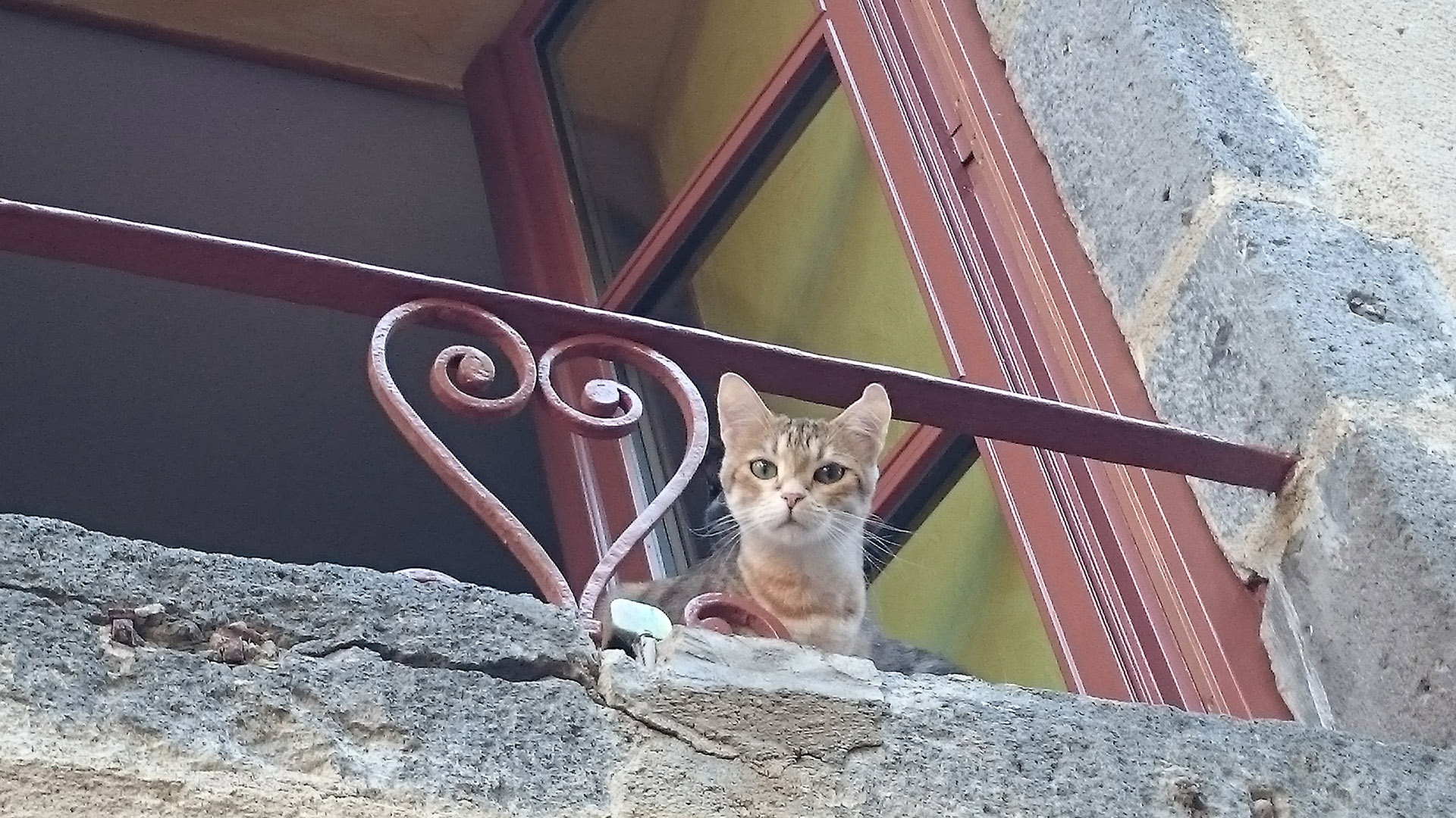 chat aurillac