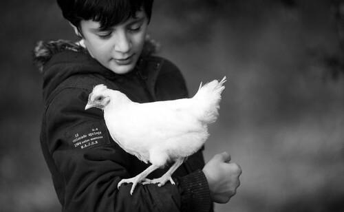 14 - Poules et enfants, suite