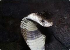 serpentarium18.jpg
