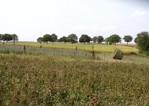 Visite chez un agriculteur-bio à Saint Broing les Moines...