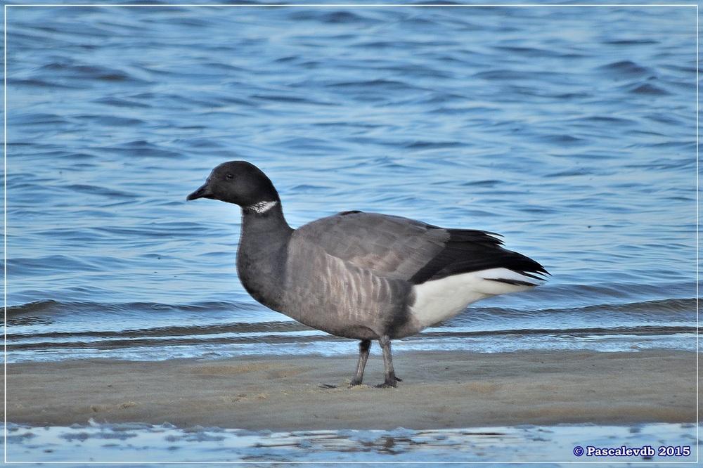 Port du Rocher à la Hume - Décembre 2015 - 3/3