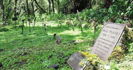 Dian Fossey a consacré sa vie entière à la protection des gorilles