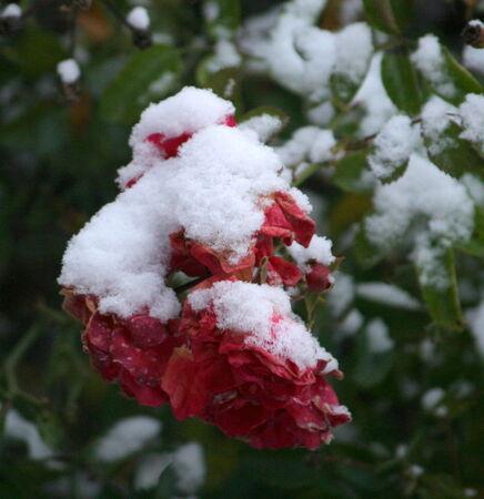 La_neige_068