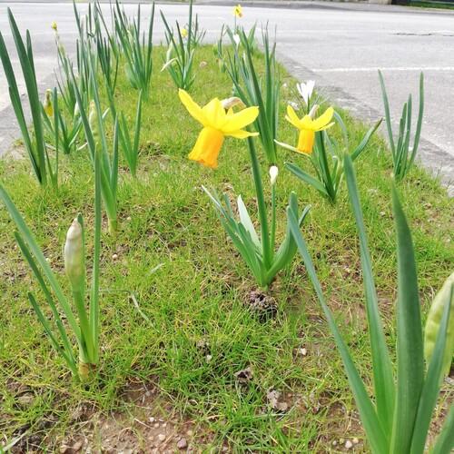 Le printemps des fleurs