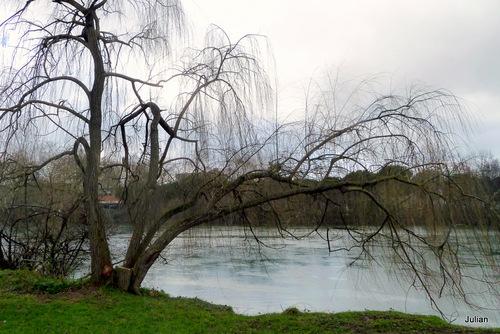 Arbres et branches en janvier